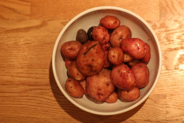 2009-potato-harvest